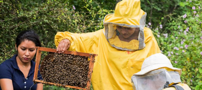 Juan Alberto Perez and Massiel Ramos provide beekeeping training