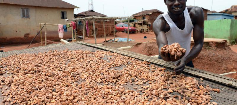Cocoa farmer Kofi poses next to the beans in neighbouring Ghana