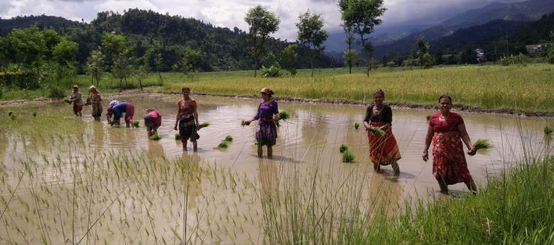 Women in Bagdali, Nepal, celebrate Nepali Rice Plantation Day. Volunteers work to increase resilience to climate change and natural disasters