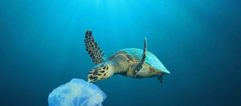 A sea turtle approaches a plastic bag