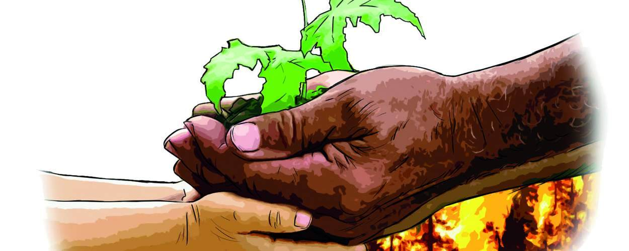 Illustration: two people's hands holding a tree seedling together