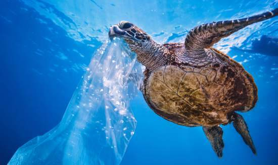 A turtle swims near a plastic bag in the ocean